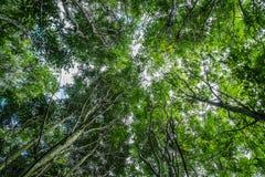 Laag die gezichtspunt van bomen wordt geschoten Stock Fotografie