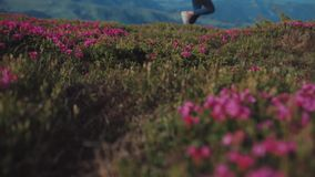 Laag hoekschot van modieuze vrouwelijke toerist die de gebloeide bergheuvel reduceren Sluit omhoog mening van roze berg stock videobeelden