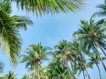 Laag Hoekweergeven van Kokospalmen tegen Blauwe Hemel royalty-vrije stock afbeelding