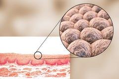 Laag van cellen, lichte micrograaf en illustratie vector illustratie