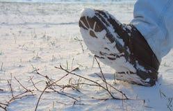 Laars in Sneeuw Stock Foto
