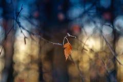 Laatste berkblad op een tak in de winter royalty-vrije stock foto's