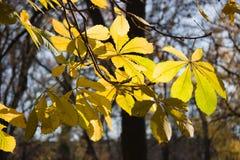 Laatste bladeren op boom Royalty-vrije Stock Foto's