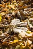 Laatste bladeren op boom Stock Afbeelding