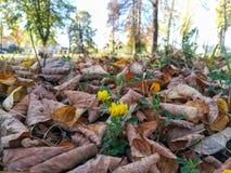 Laatste bloem op de Herfst royalty-vrije stock foto