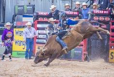 Laatste Cowboy Standing Stock Afbeeldingen