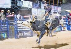 Laatste Cowboy Standing Royalty-vrije Stock Afbeeldingen