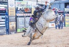 Laatste Cowboy Standing Royalty-vrije Stock Foto's