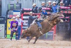 Laatste Cowboy Standing Royalty-vrije Stock Fotografie