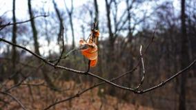 Laatste geel blad op de boom stock afbeeldingen
