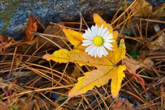 Laatste groeten van de herfst Stock Fotografie