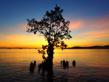 Laatste Mangrove Status Stock Foto