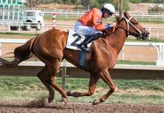 Laatste Paardenkoersen in Arizona tot Daling stock afbeeldingen