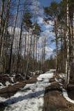 Laatste sneeuw Stock Afbeeldingen