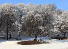 Laatste sneeuw Royalty-vrije Stock Foto's