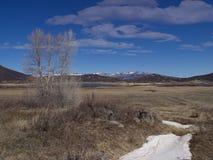 Laatste sneeuw van het Hoge Land van Colorado royalty-vrije stock fotografie