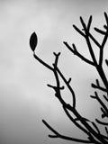 Laatste verlof op een boom Royalty-vrije Stock Fotografie