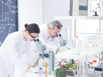 Lab analysis under microscope Stock Images