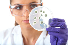 Lab assistant check petri dish with bacterium. Young attractive laboratory assistant check petri dish with agar and bacterium on it, isolated on white stock photography