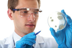 Lab assistant check petri dish with bacterium. Young male laboratory assistant check petri dish with agar and bacterium on it, isolated on white royalty free stock images