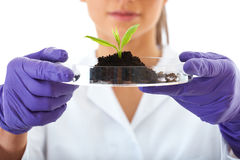 Lab assistant holds small flat dish with plant. Young lab assistant holds small flat dish with soil and plant, wears violet gloves, isolated on white stock images