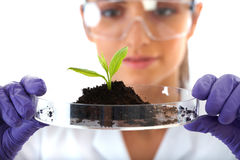 Lab assistant holds small flat dish with plant Royalty Free Stock Photos