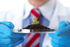Lab assistant holds small flat dish with plant Stock Image