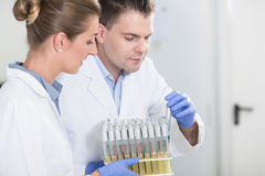 Lab assistants in research laboratory preparing samples for scientific test royalty free stock photography