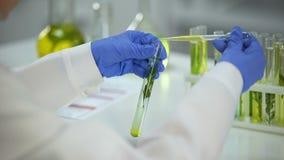 Lab badacz kapie wazeliniarskiego ciecz w tubce z zielonej rośliny kosmetologii ekstraktem zbiory