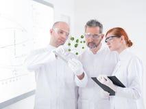 Lab green samples analysis Royalty Free Stock Images