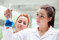 Lab partners looking at a flask. In a laboratory Royalty Free Stock Photography
