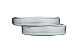 Lab. petri dish. Laboratory glassware on a background Stock Image