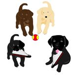 Lab puppies playing Royalty Free Stock Photo