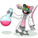 Lab rat. Rat in white overall holding chemical flask with some liquid Stock Photography