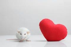 Lab rat Stock Photography