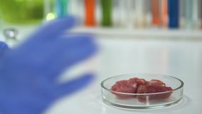 Lab researcher taking and analyzing meat sample with magnifying glass, export. Stock footage stock video