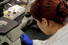 Lab tech working with microscope Royalty Free Stock Photos