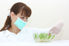 A lab technician Stock Image