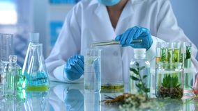Lab technician pouring oil in test liquid, cosmetics production, aromatherapy