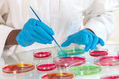 Lab technician workinh on research with  petri dish Royalty Free Stock Images