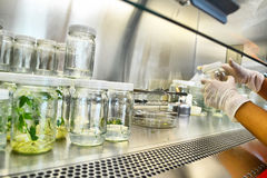Lab. Tissue culture is the growth of tissues or cells separate from the organism. This is typically facilitated via use of a liquid, semi-solid, or solid growth Royalty Free Stock Image