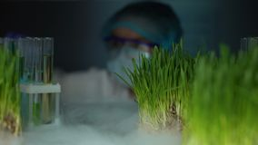 Lab worker comparing plant in test tube and green wheat sample, experiment. Stock footage stock video footage