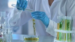 Lab worker pouring chemical liquid herbal tube, perfumery extract, cosmetology. Stock footage stock footage