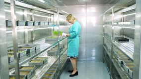 Lab worker reviews growing young green sprouts in soil, in small boxes, on shelves of special chamber, in laboratory. Science laboratory research