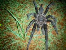 Laba hitam malam Royalty-vrije Stock Afbeelding
