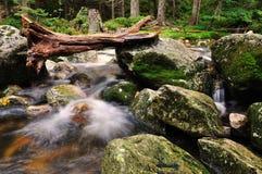 labe rzeka Obraz Royalty Free