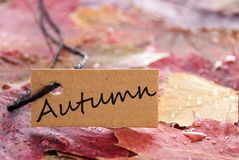 A label with autumn on it. A label with autumn written on it and with autumn leaves as background Stock Images