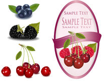 Label with berries. Group of berries. Stock Image