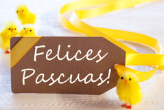 Label With Chicks, Text Felices Pascuas Means Happy Easter Royalty Free Stock Photos