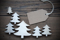 Label And Christmas Trees Copy Space Frame Royalty Free Stock Photography